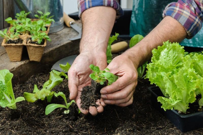 Jardinage / Alimentation animale