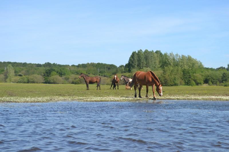 chevaux brivet