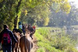 aux ânes etc