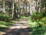 forêt de bernugat à Saint-Gildas-des-Bois