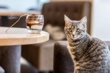 salon de thé le chat zen