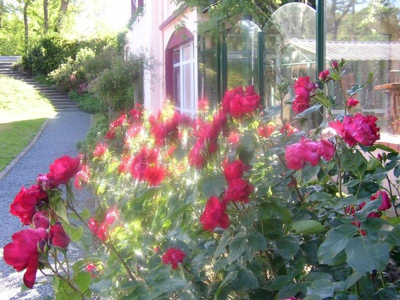 Roses en fleur près du Jardin de l'Isac